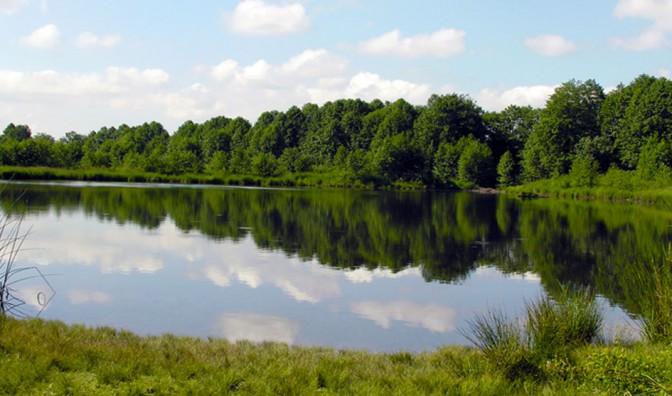 Surrey Lake